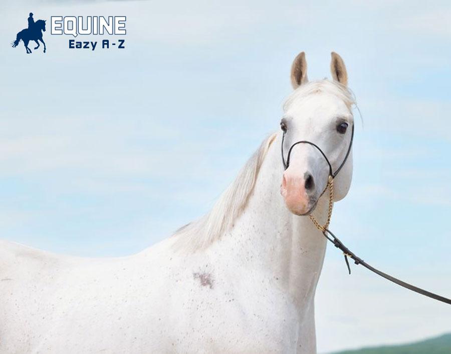 Equine Eazy A-Z